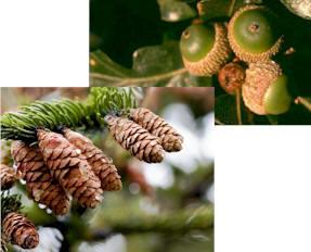 1 Wood Botany
